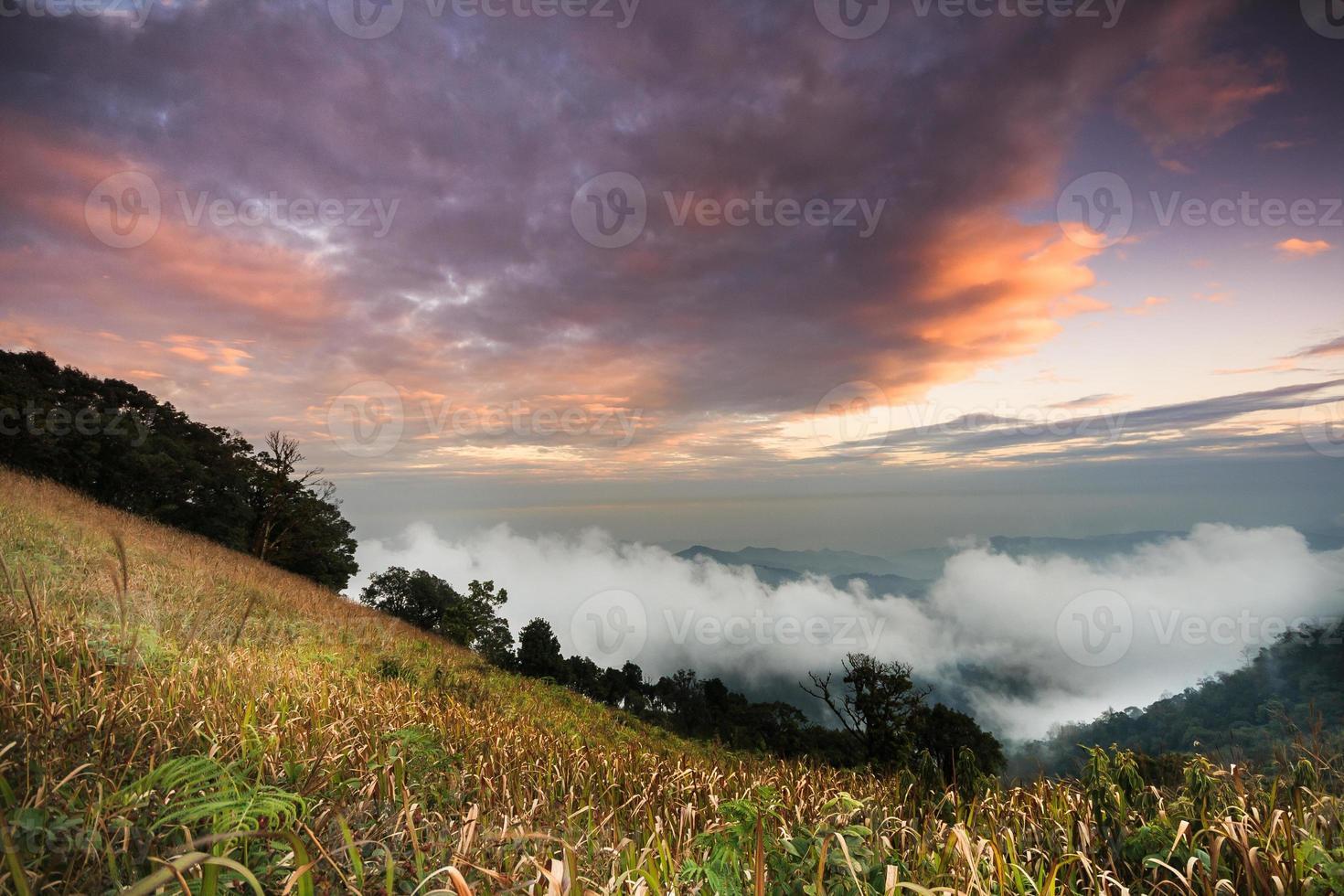 Bergwald und regnerischer Nebel Sonnenuntergang foto