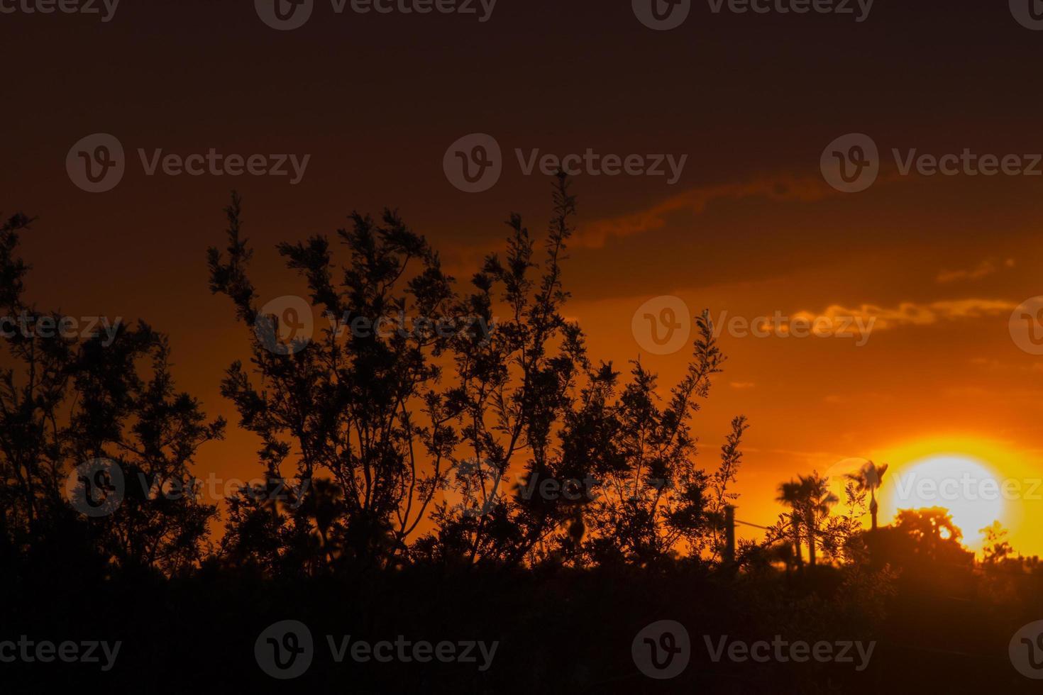 Sonnenuntergangswüste foto