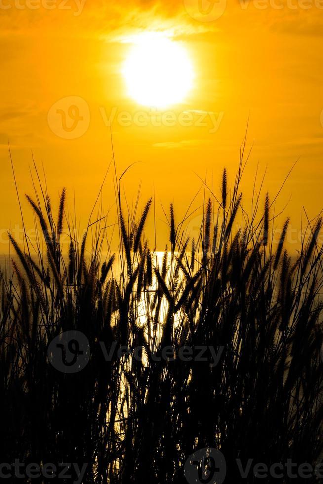 Grassilhouette bei gelbem Sonnenuntergang Sonnenuntergang farbigen Rauch und Gras foto