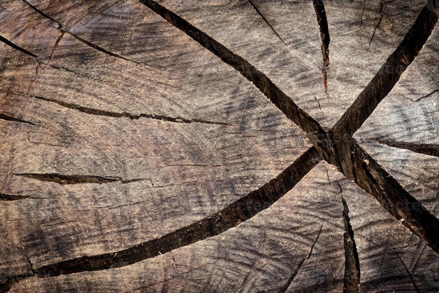Stamm geschnittene Textur foto