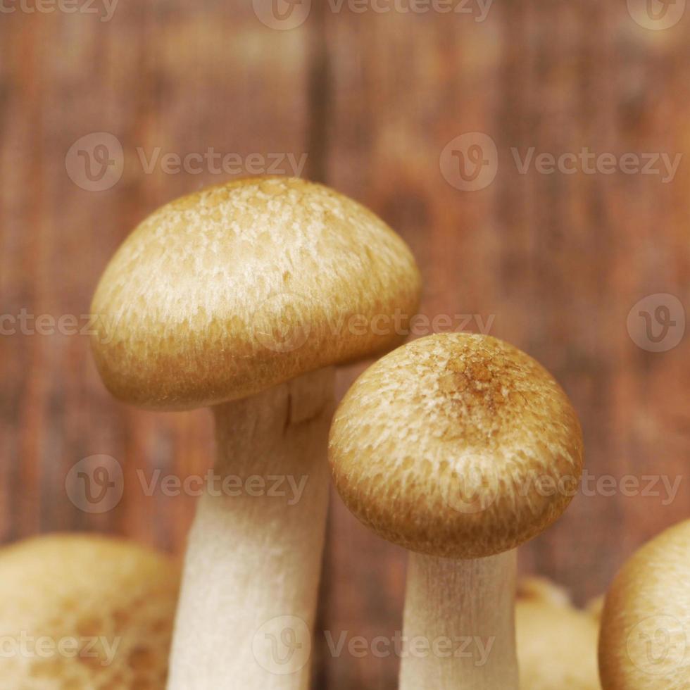 Pilze schließen foto