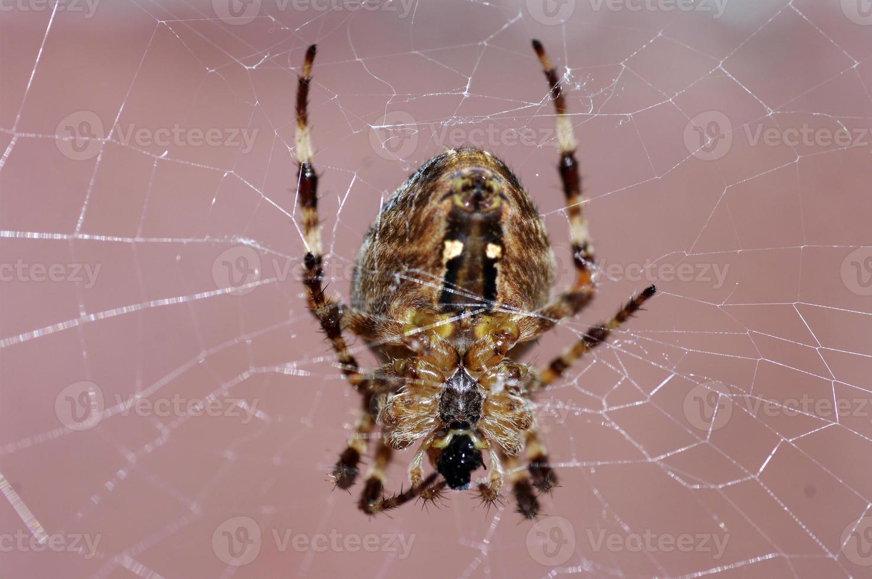 Spinne in Nahaufnahme foto