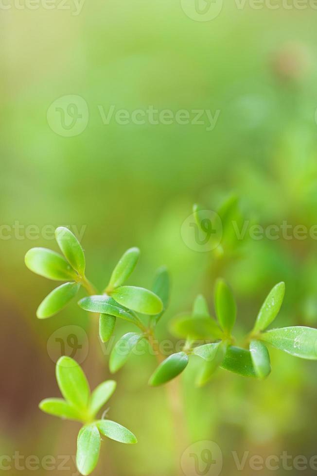 grüner Sämling foto
