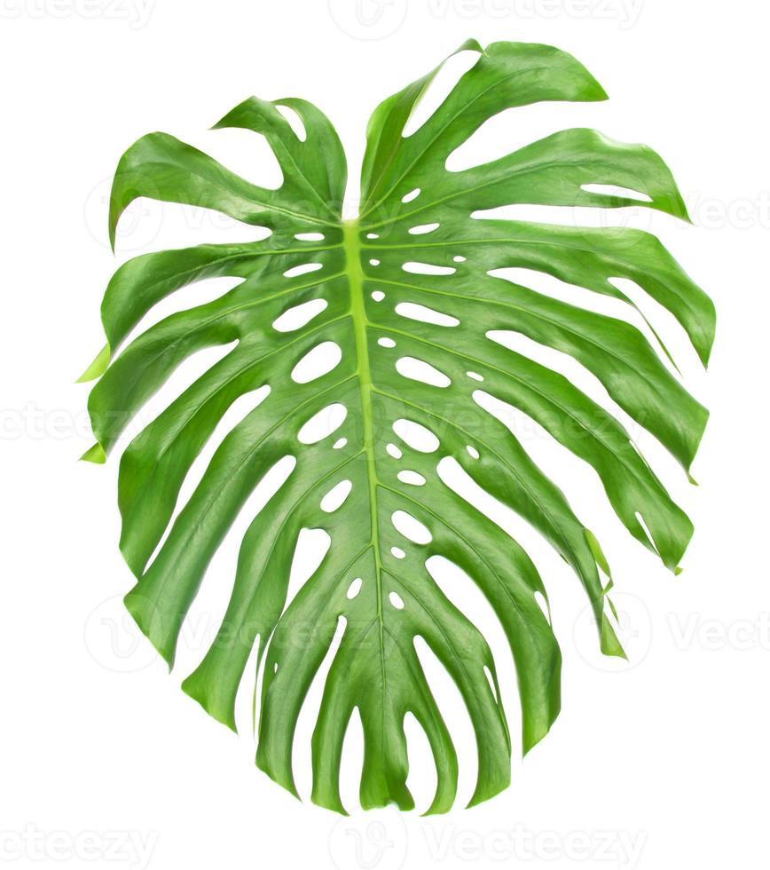 helles tropisches Blatt schließen oben mit Löchern foto