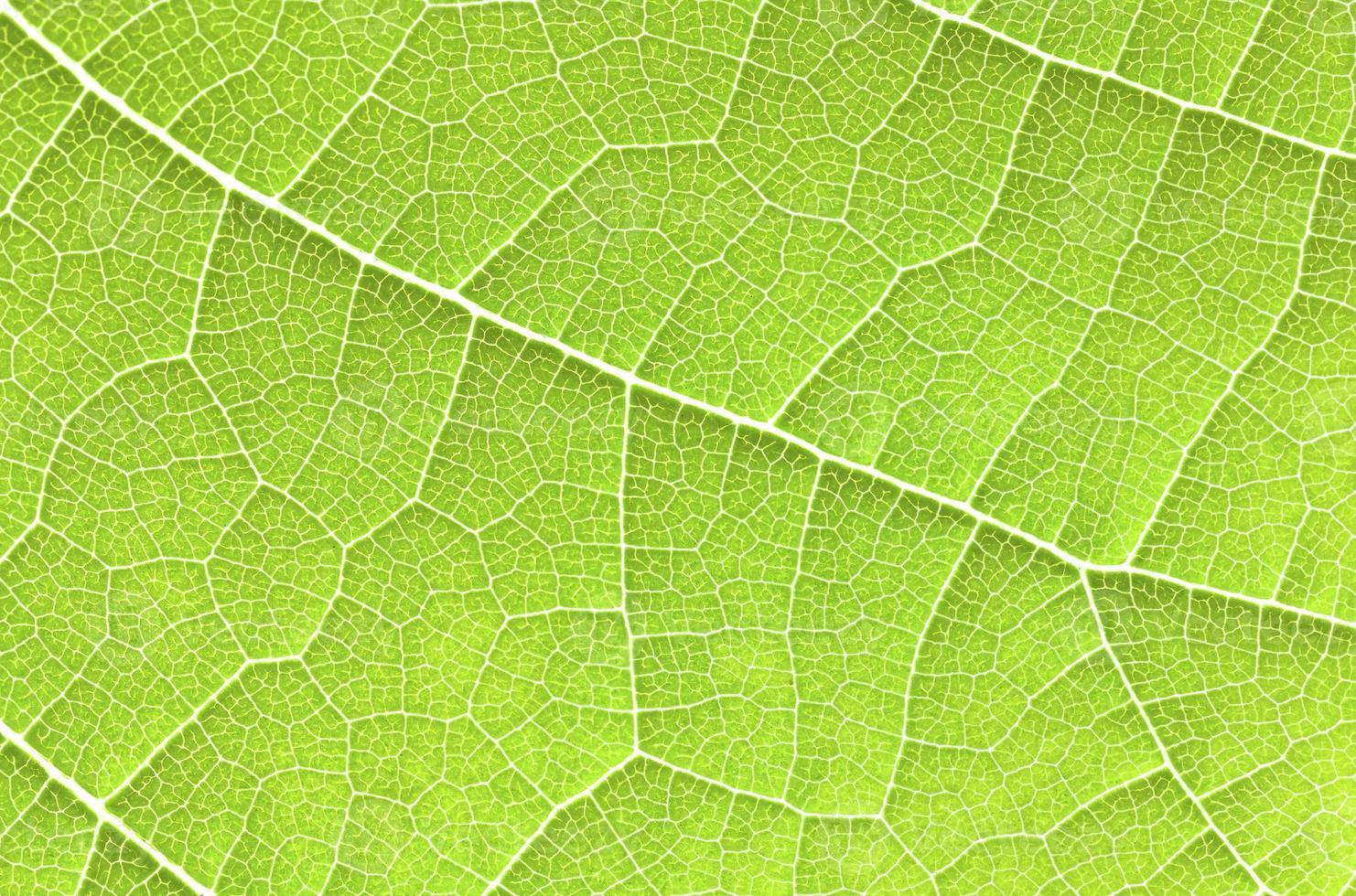 grünes Blatt nah oben. foto