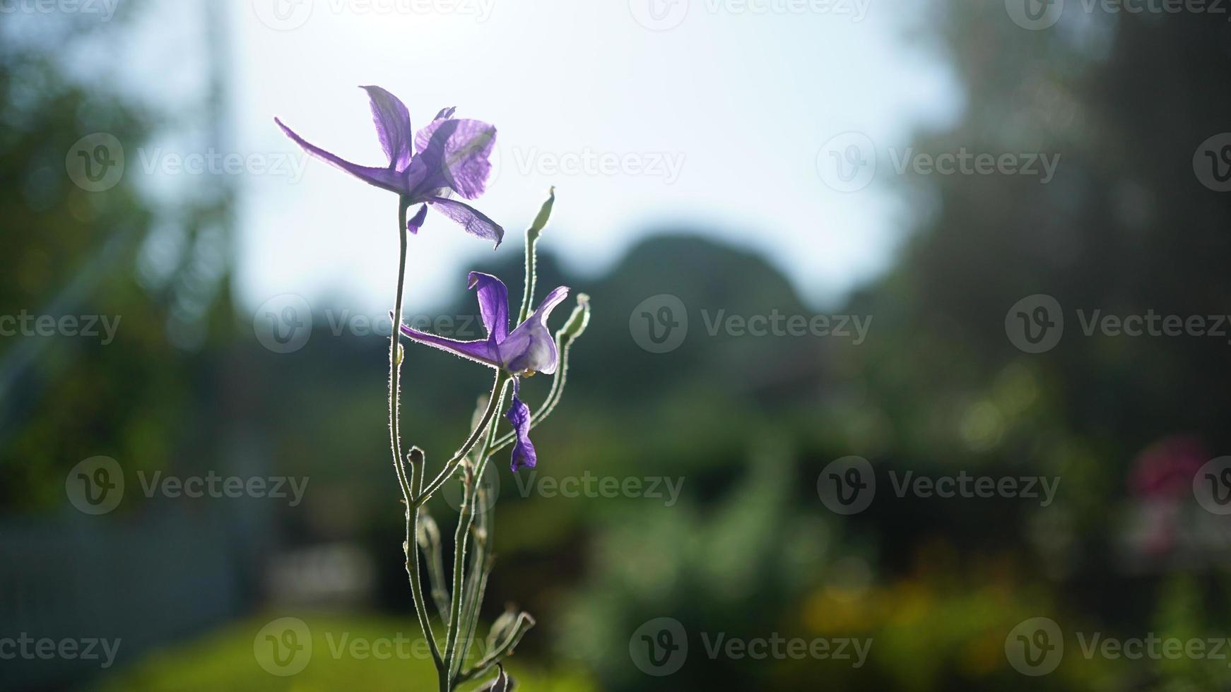 Blume und Nahaufnahme foto