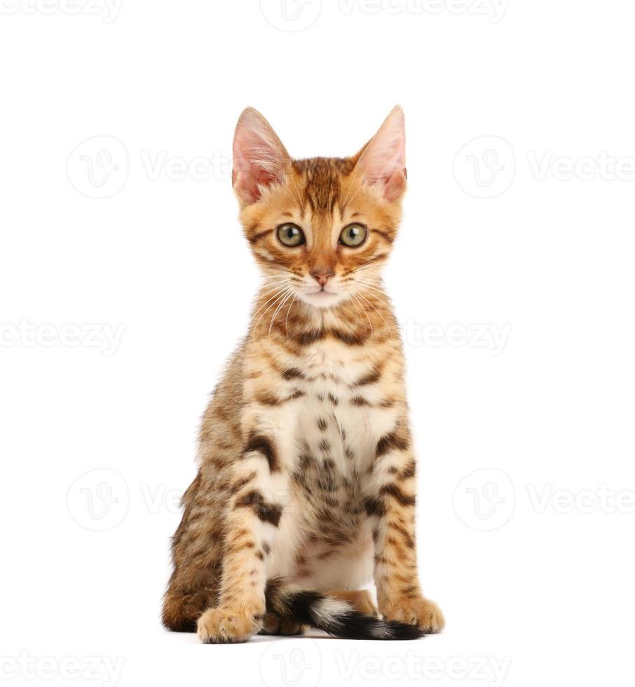 Kätzchen foto