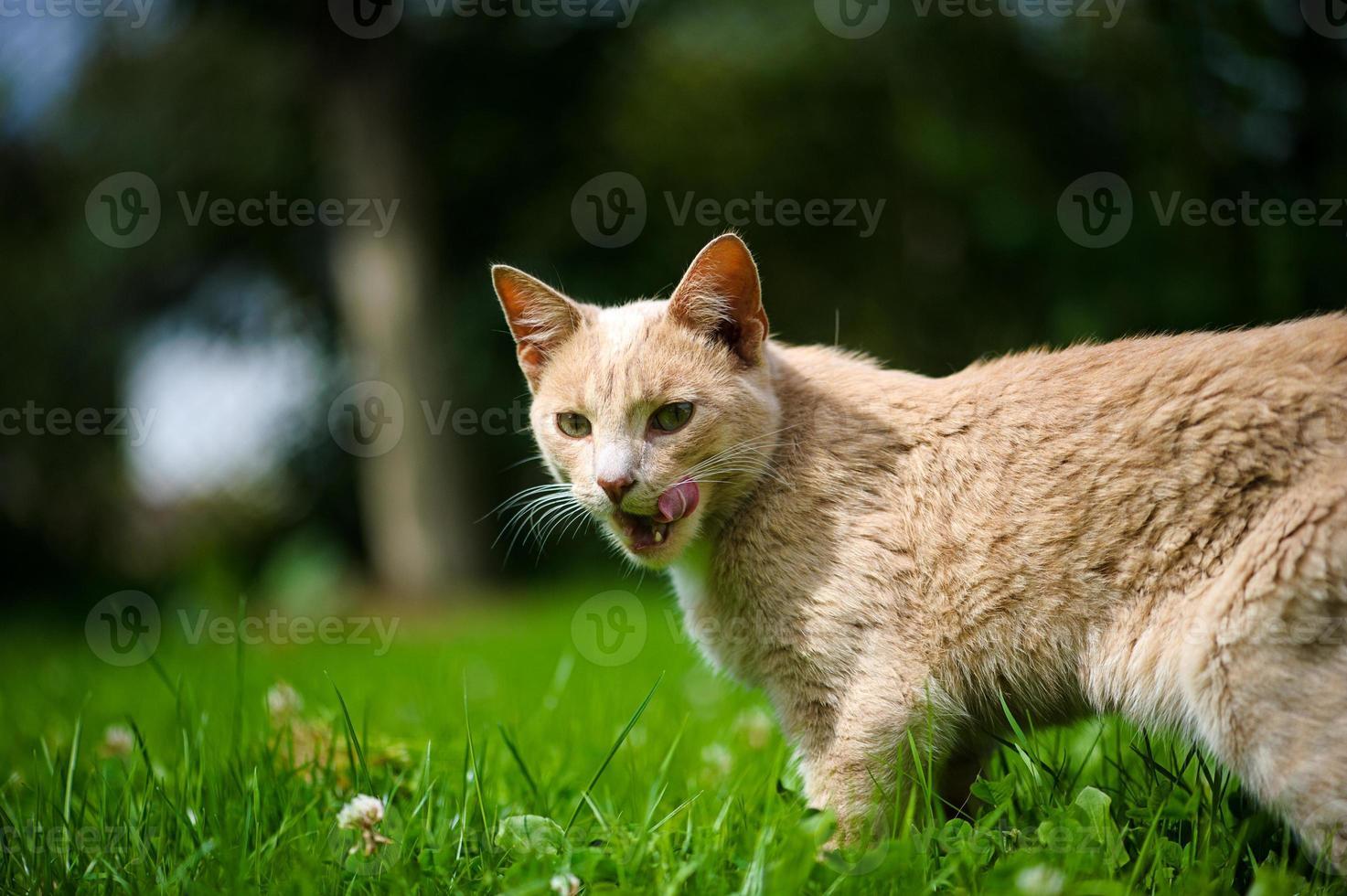 lustige Katze foto