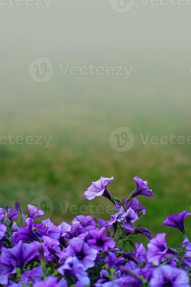 blühen foto