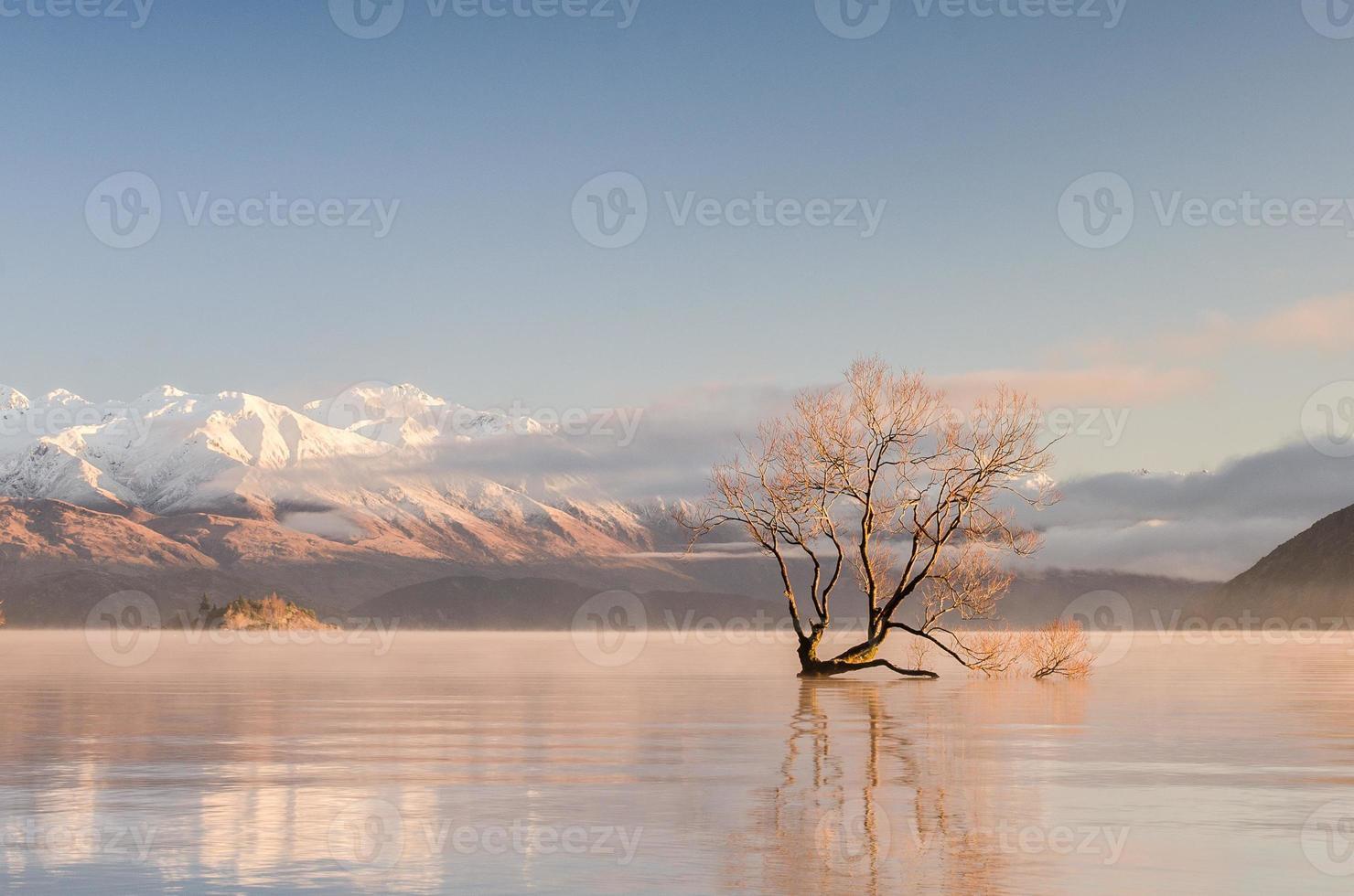 einsamer Baum foto