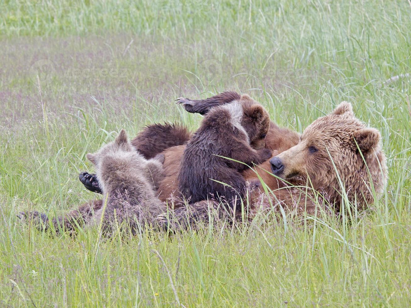 Grizzlybär Mutter Krankenschwestern Jungen (1) foto