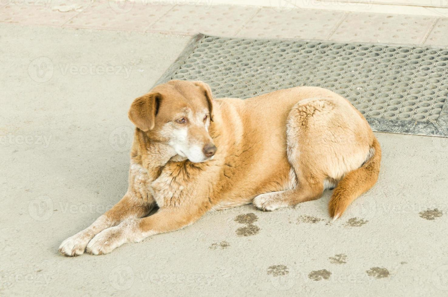 streunende Hunde auf der Straße foto