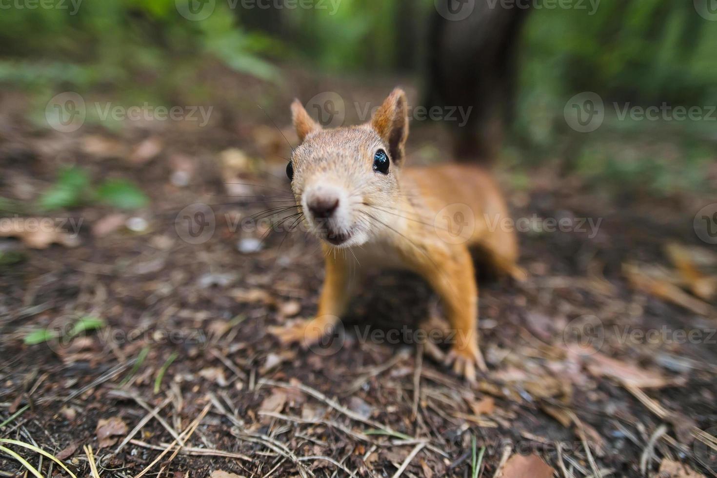neugieriges Eichhörnchen foto
