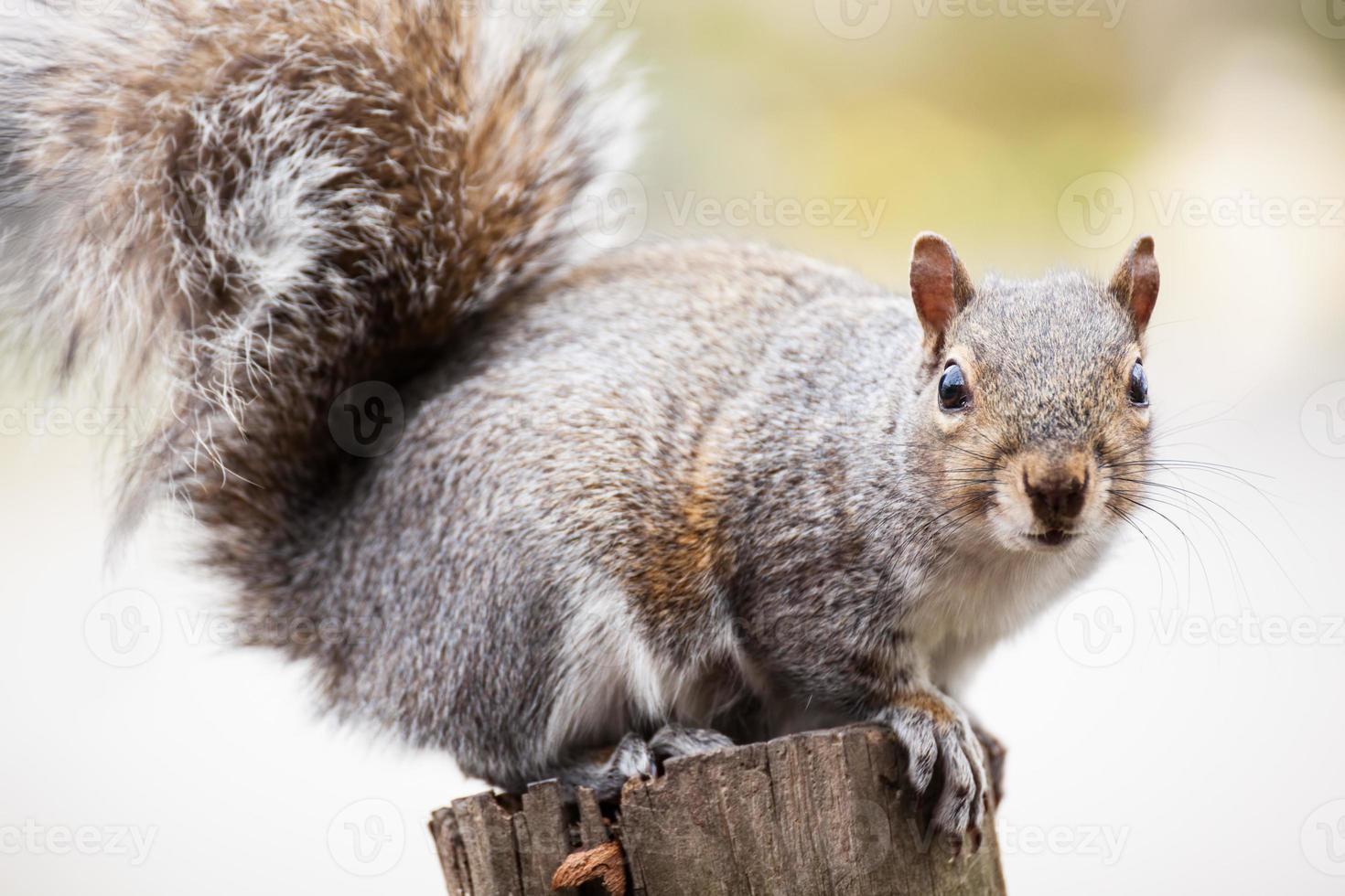 hockendes Eichhörnchen foto