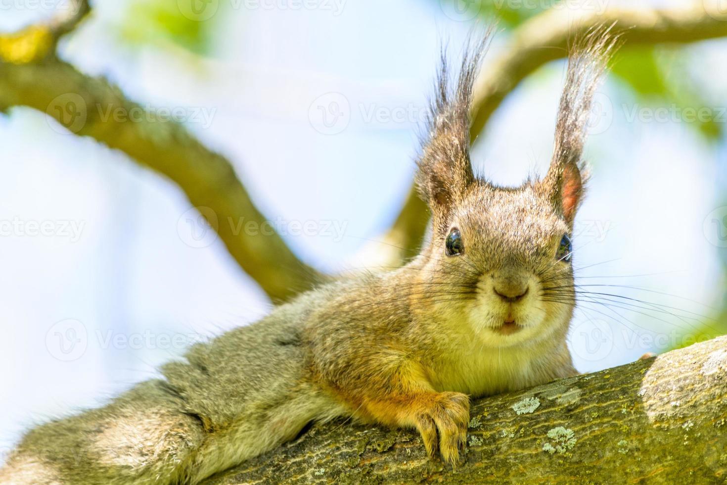 Eichhörnchen 9 foto