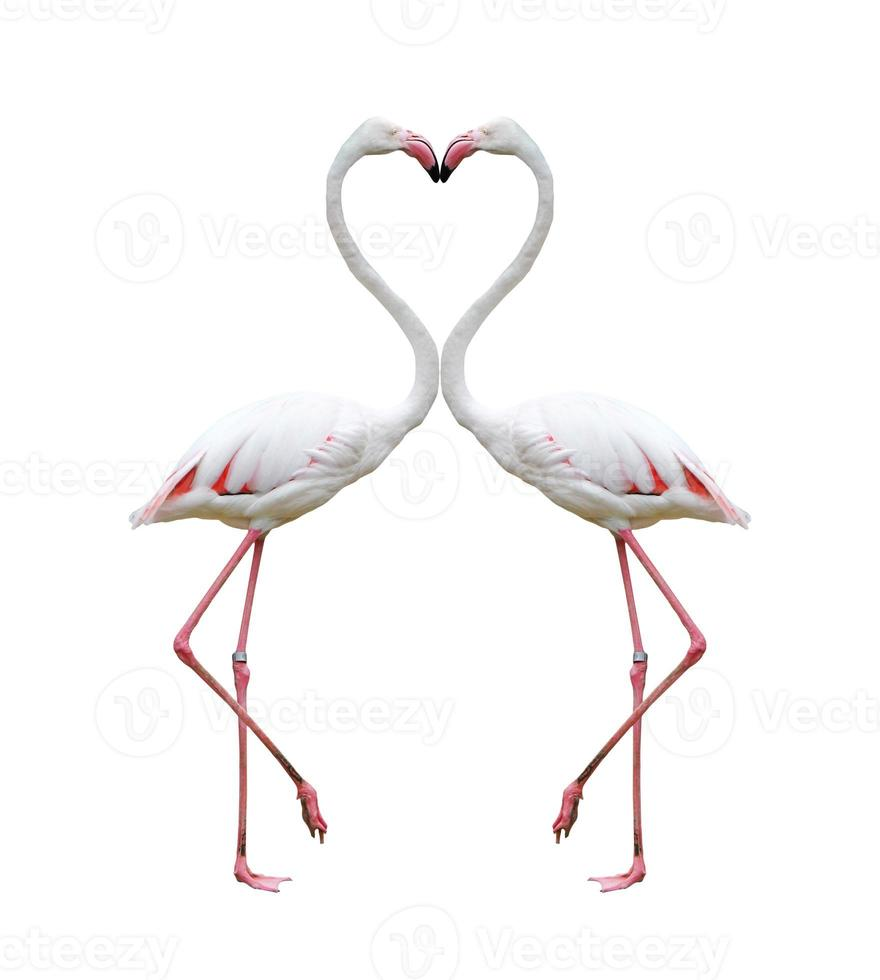 zwei bunte Flamingos, die ein Gehör bilden foto