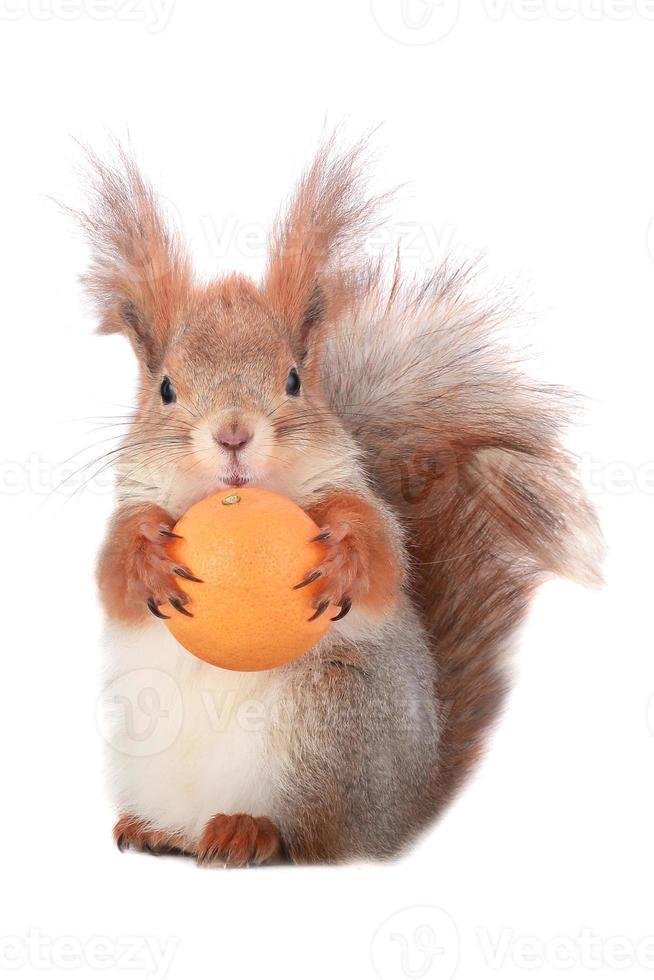 Eichhörnchen foto