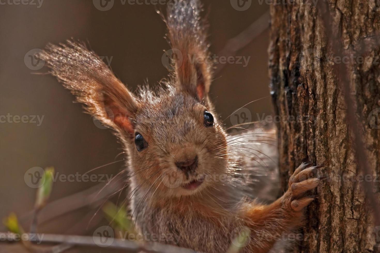 Porträt des Eichhörnchens mit Baum foto