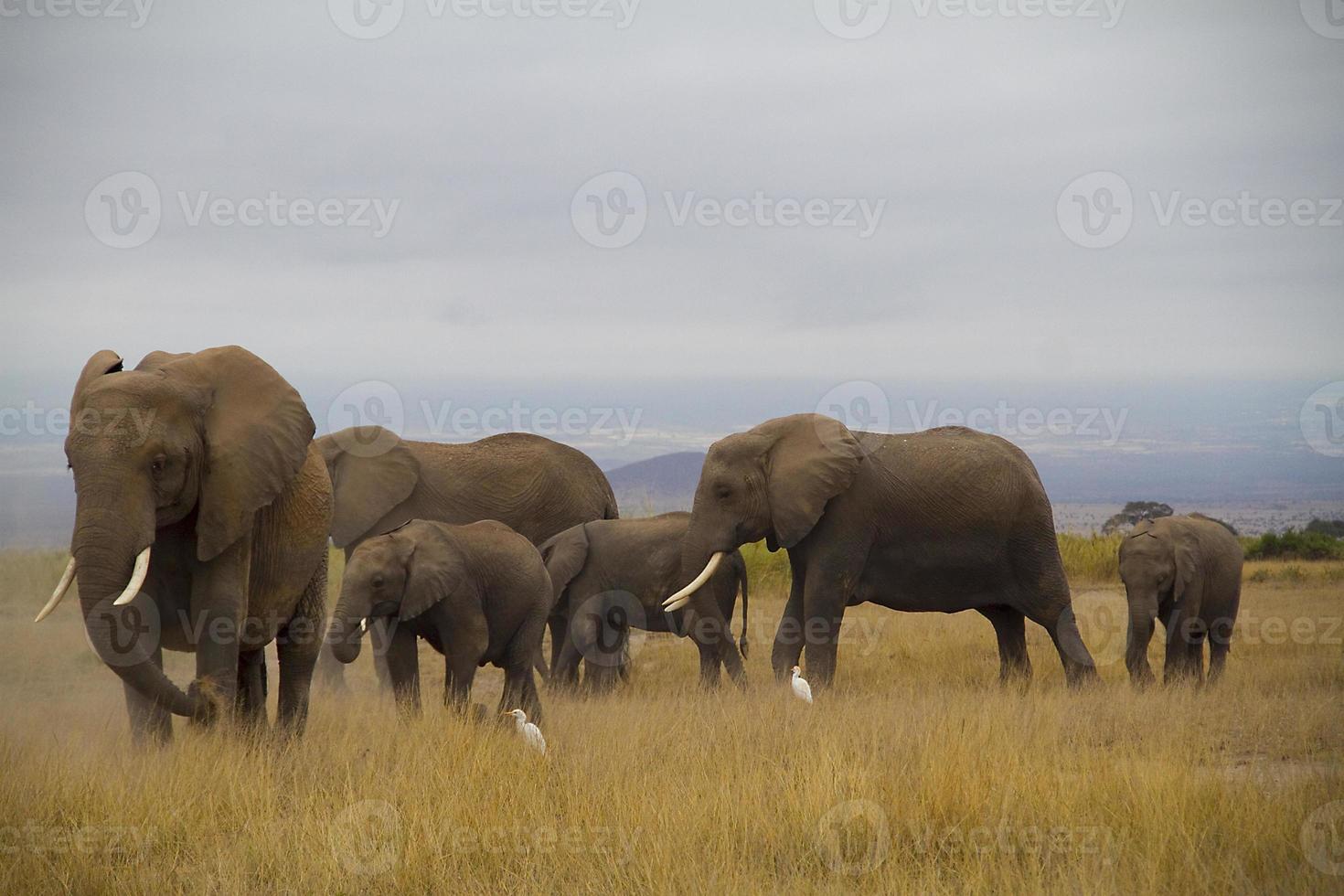 Gruppenfoto von Elefanten foto