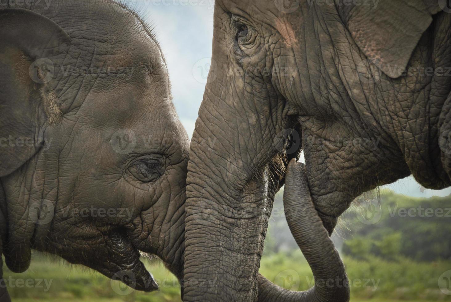 intimer Moment zwischen Mutter und Elefantenbaby foto