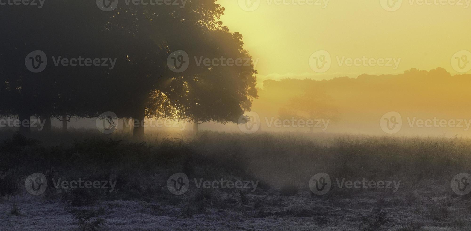 Hirsch landschaftlich foto