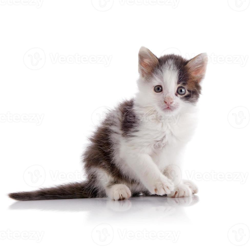 schönes fleckiges kleines Kätzchen. foto