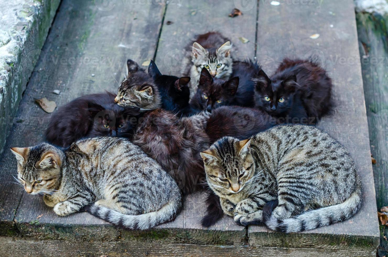 streunende Katzenfamilie foto