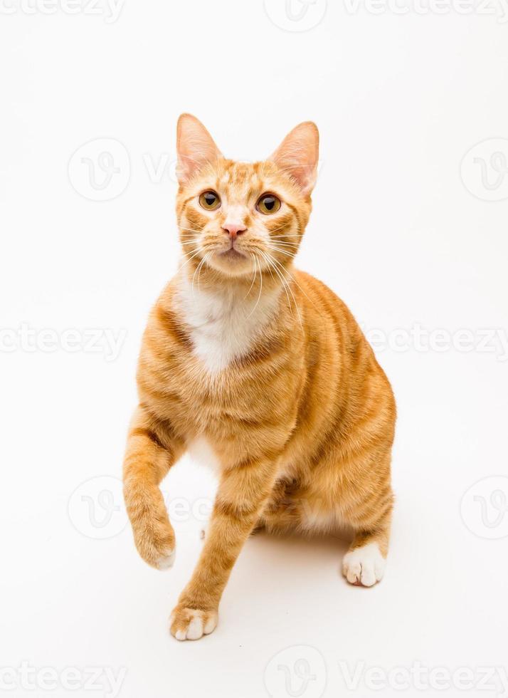 Orange Tabby Katze spielt foto