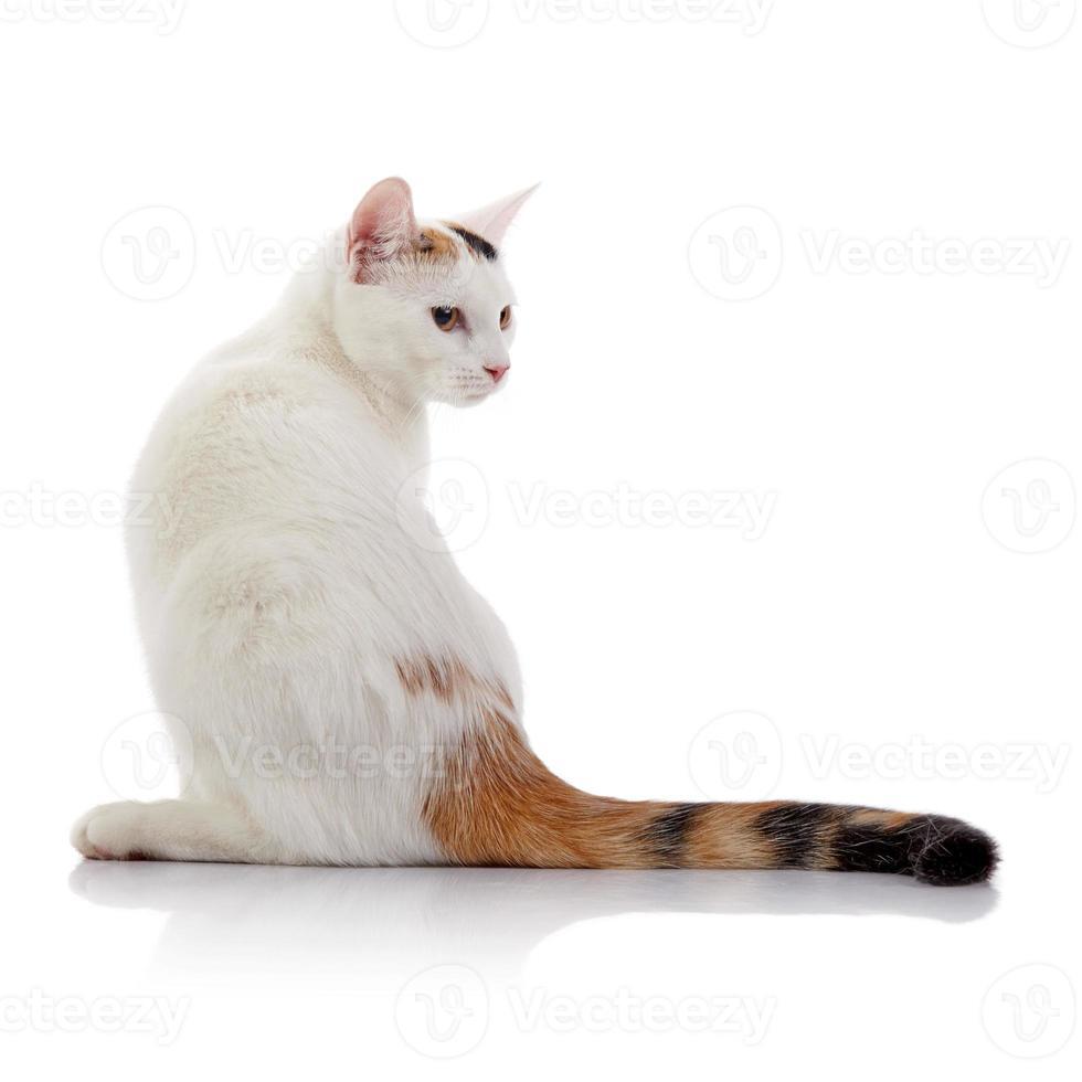 weiße Katze mit einem mehrfarbig gestreiften Schwanz foto