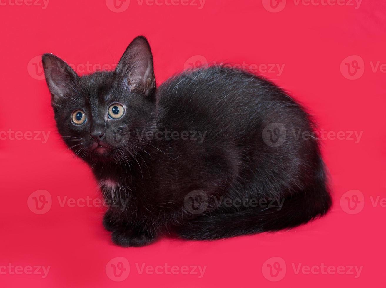 kleines schwarzes Kätzchen sitzt auf rot foto