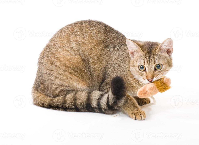 schöne junge Katze auf weißem Hintergrund foto