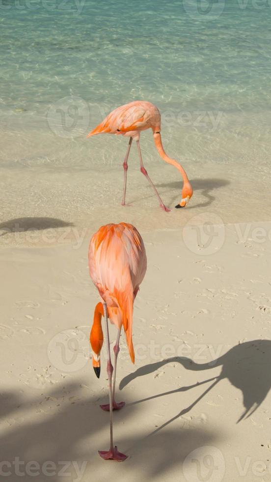 Flamingofreunde foto