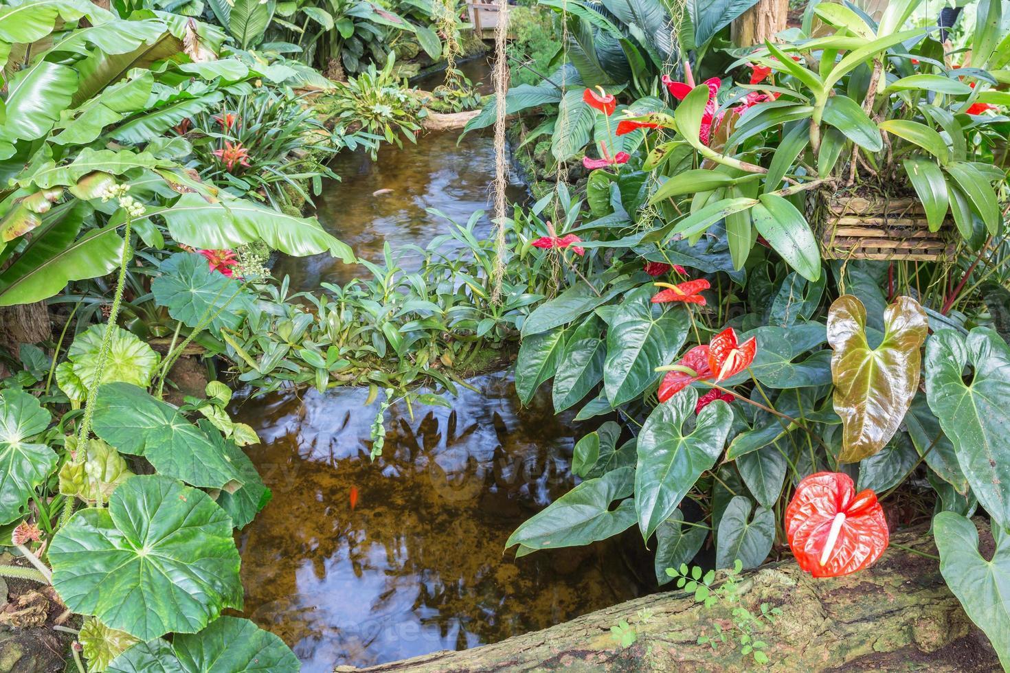 Botanischer Garten mit kleinen Bach- und Flamingoblumen foto
