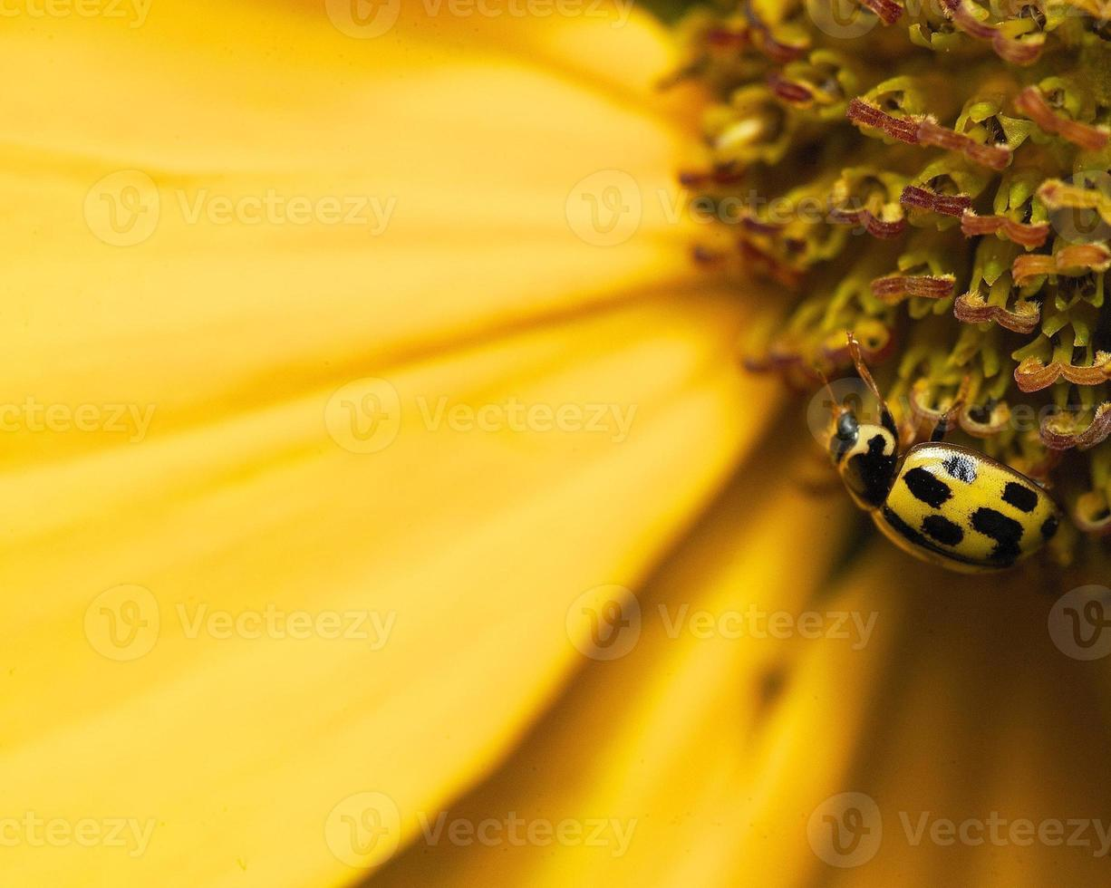 Insekten foto