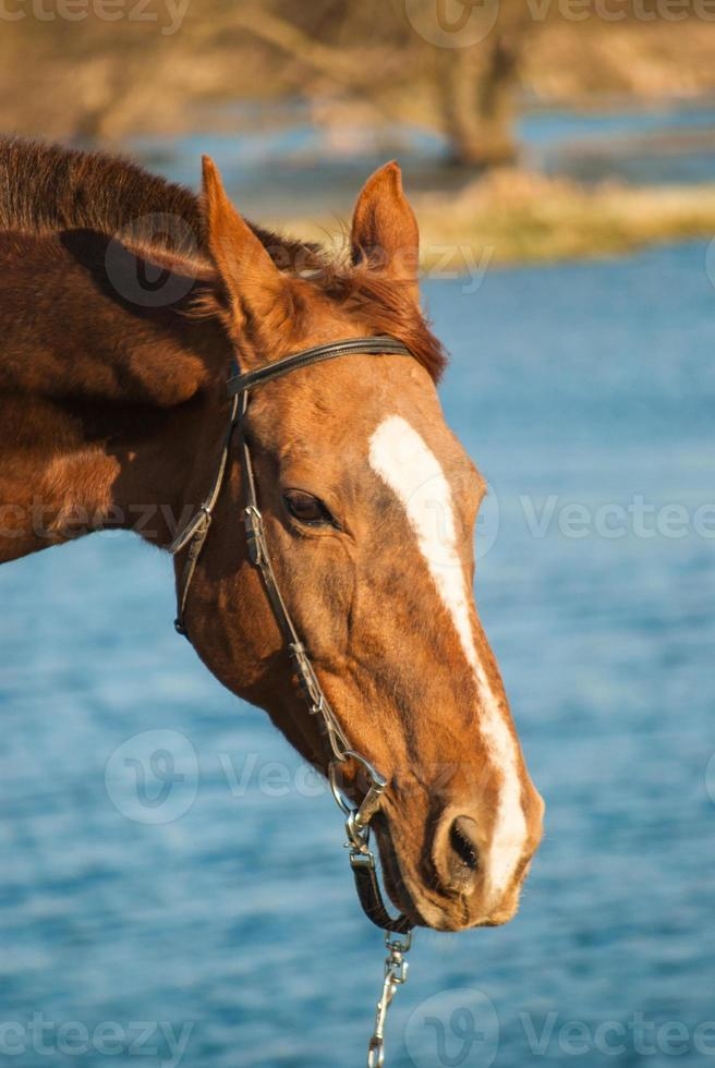 Pferd foto