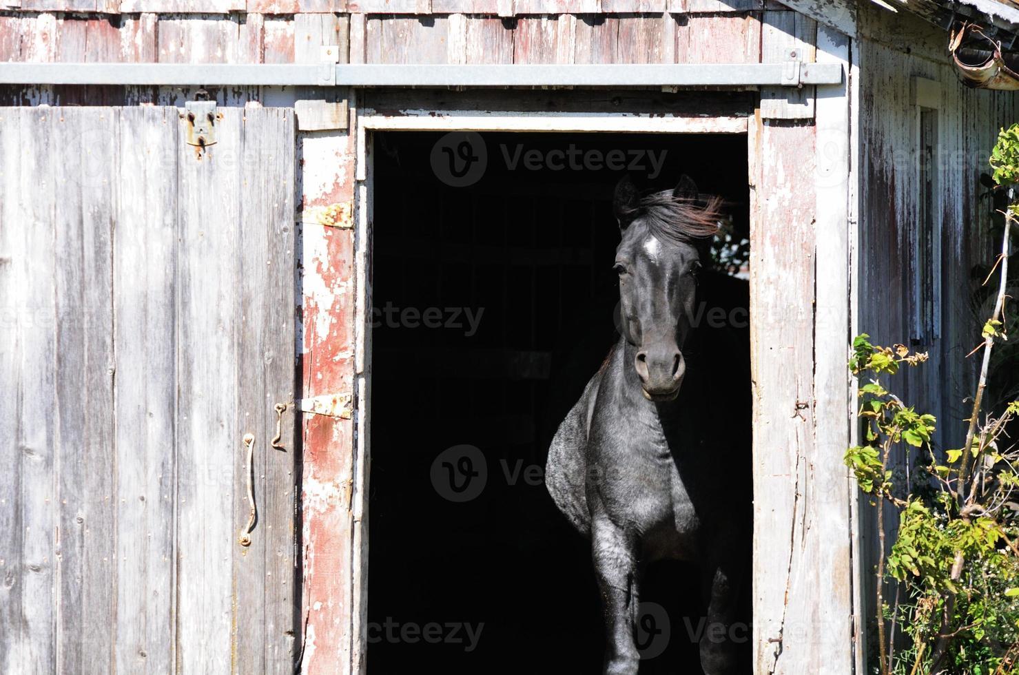 Pferd in der Tür foto