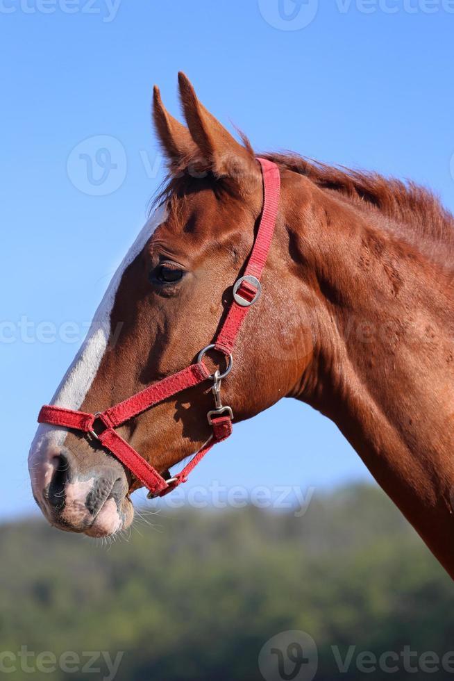 reinrassiges junges Pferd, das gegen blauen Himmel aufwirft foto