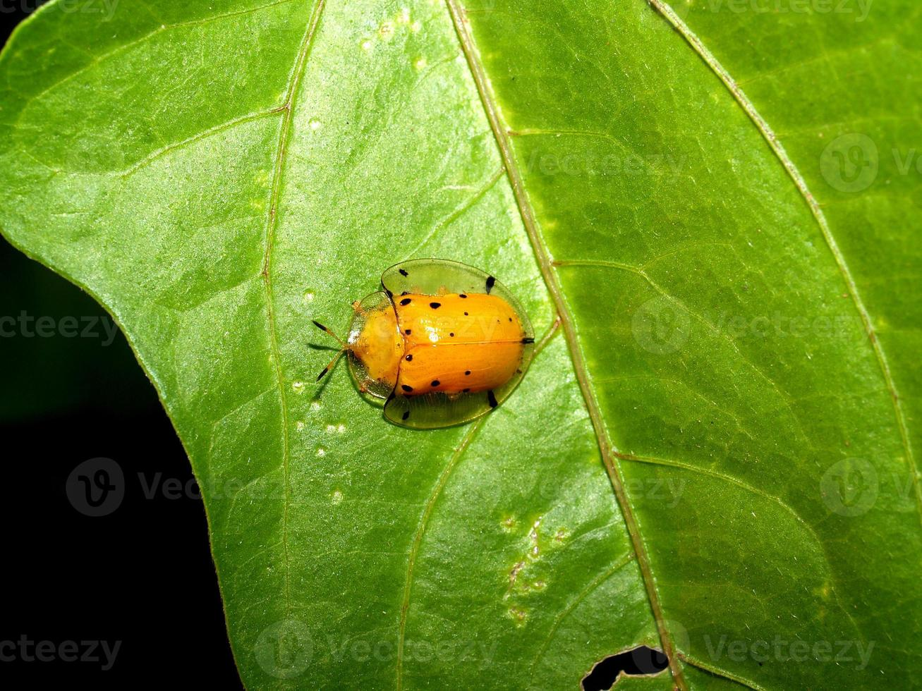 Insekteninsekt foto