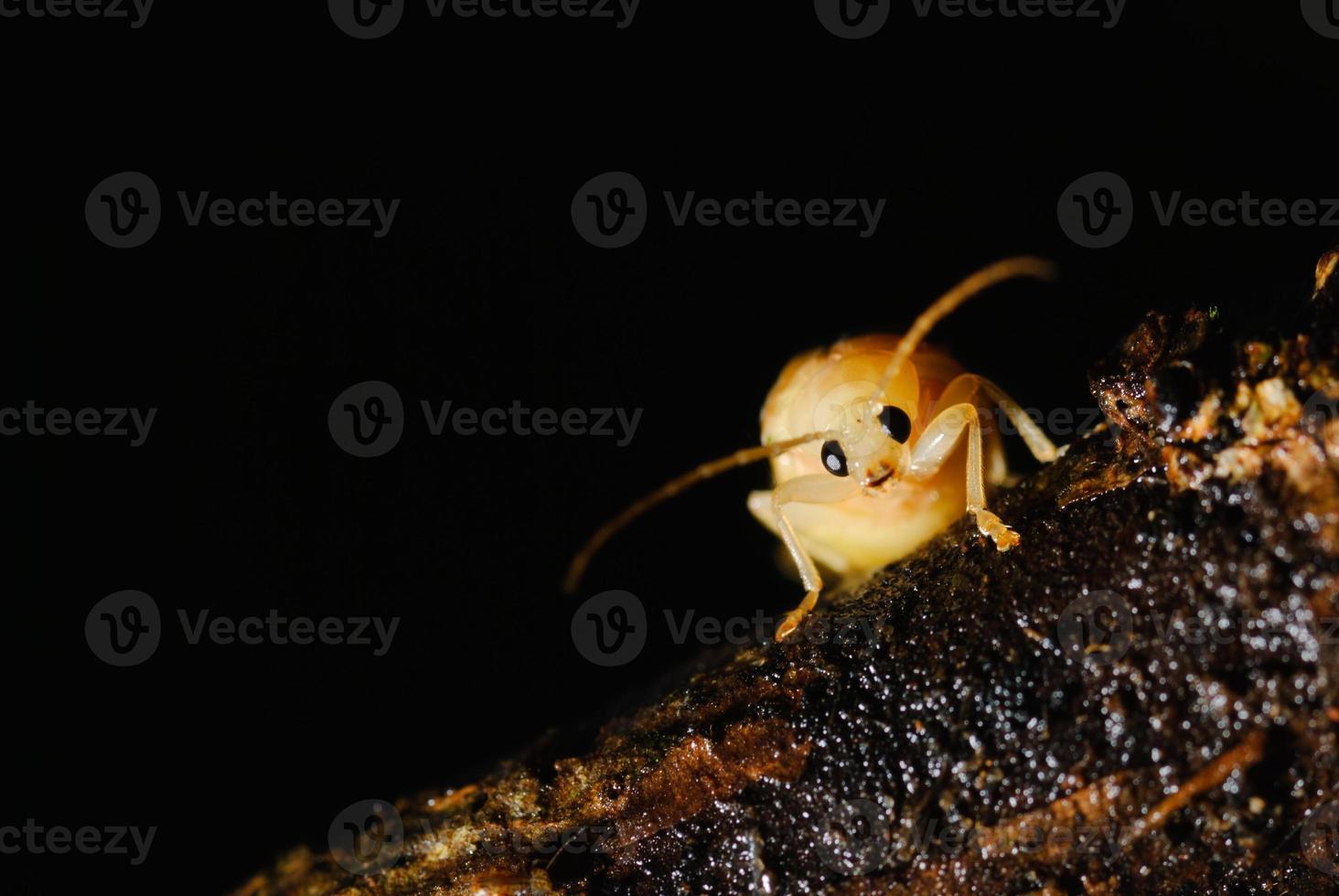 Kung Fu Bug foto
