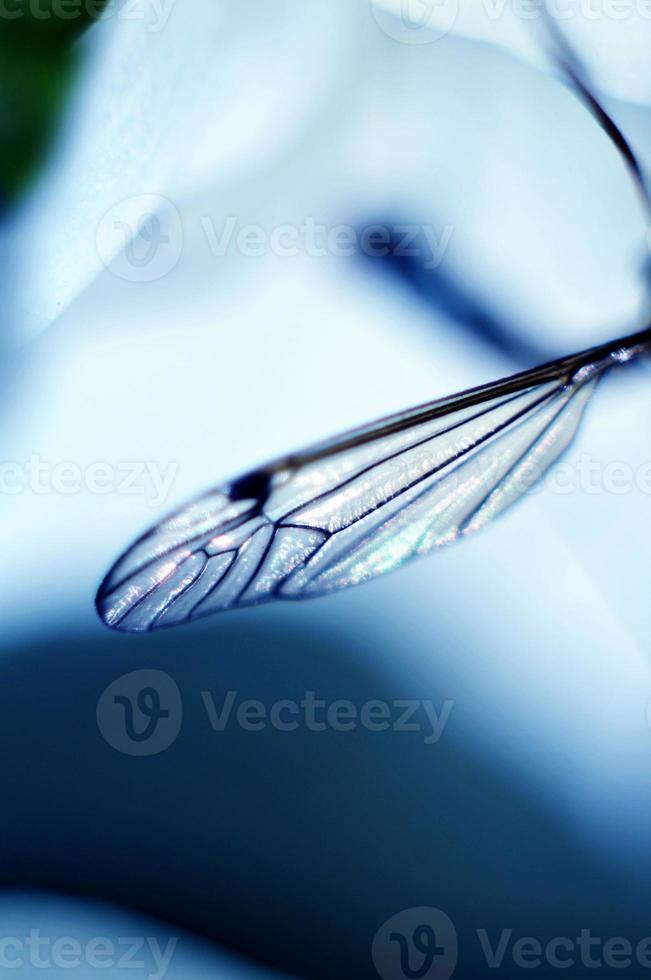 Fliegenflügel foto