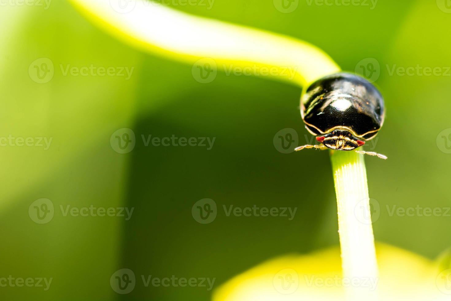 schwarzer Käfer auf Blume foto