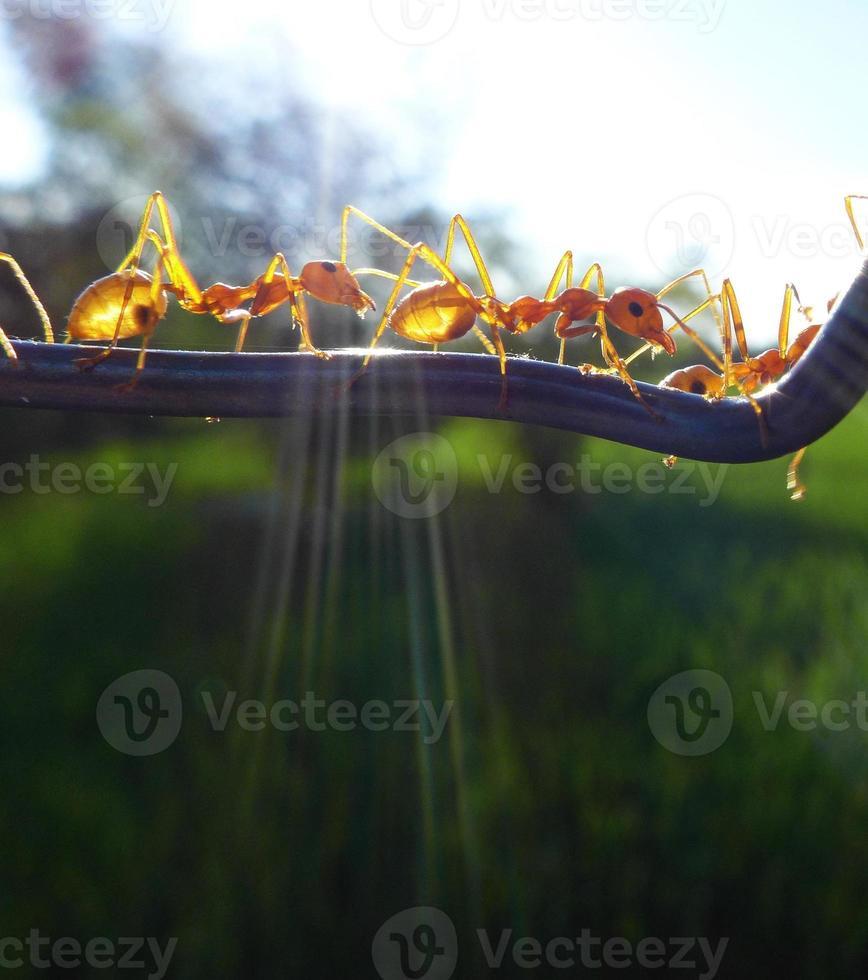 Ameisen foto