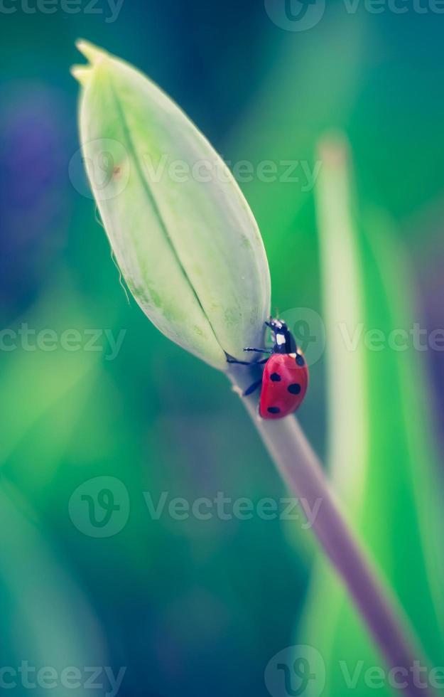 Weinlesefoto des Marienkäfers auf Pflanze foto