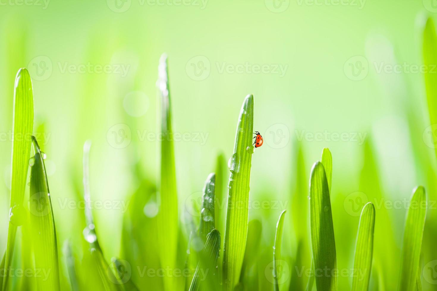 Detail von Gras foto