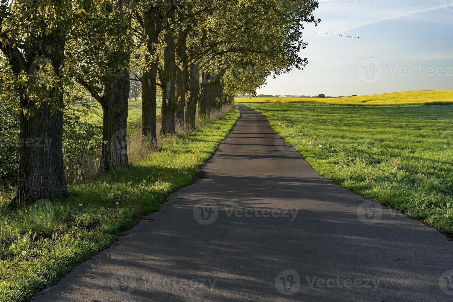 Straße zwischen grünen Feldern und blauem Himmel, Natur foto