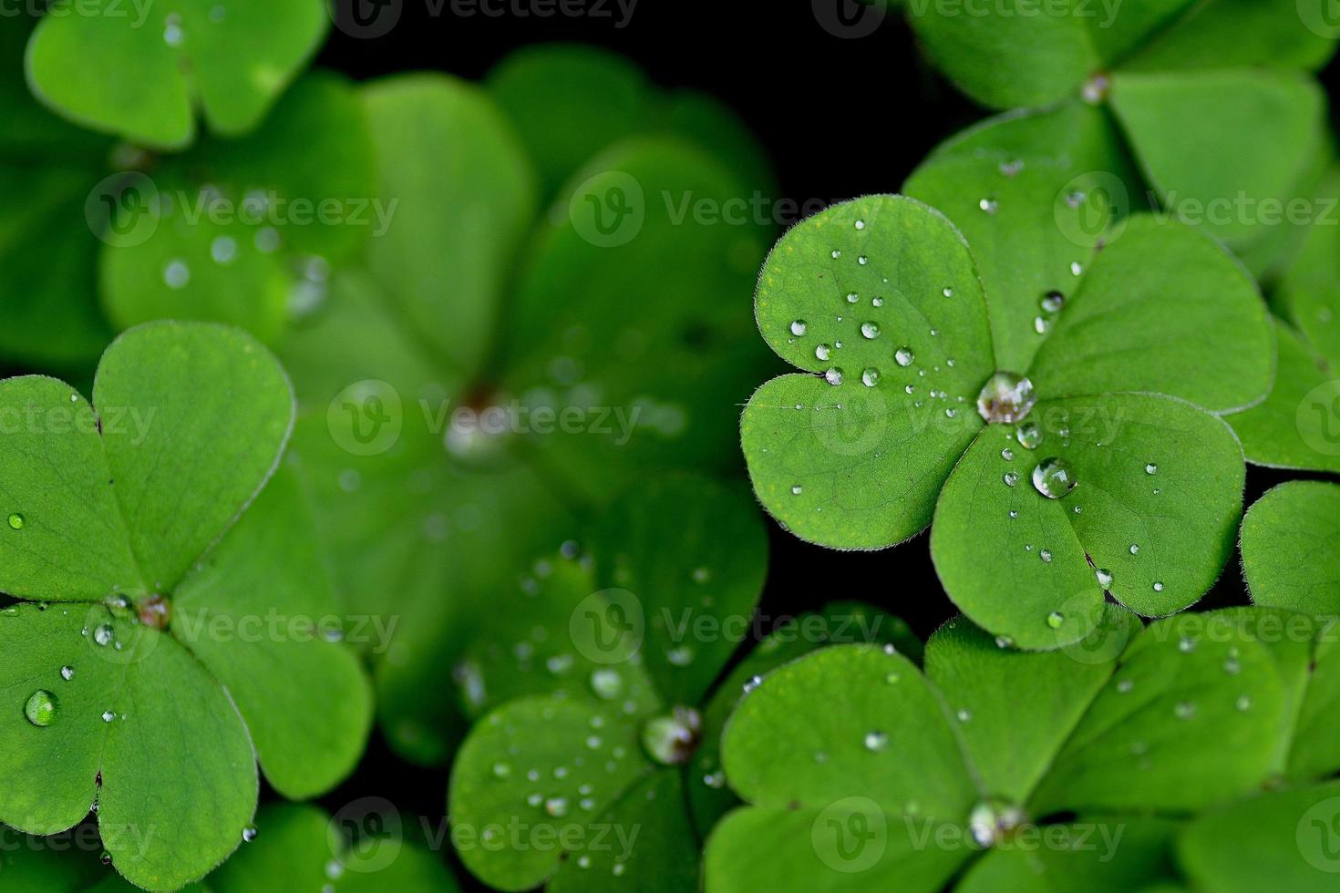 fällt auf grün foto