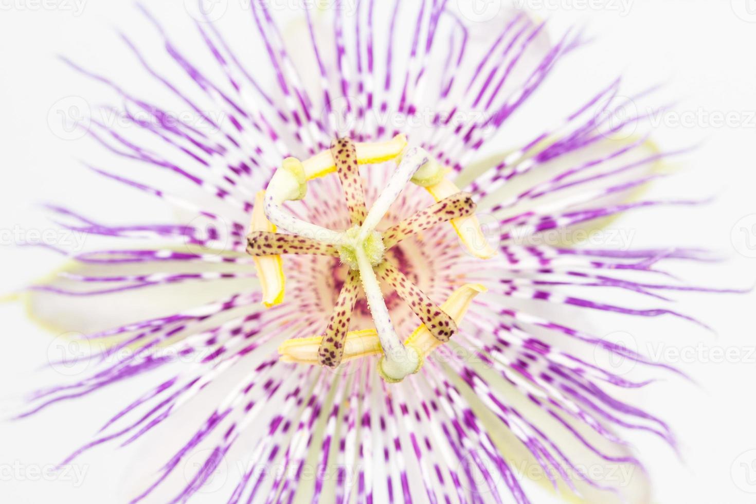 Zentrum Nahaufnahme von Passionsblume foto