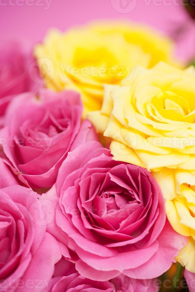 Blume der rosa Rosen foto