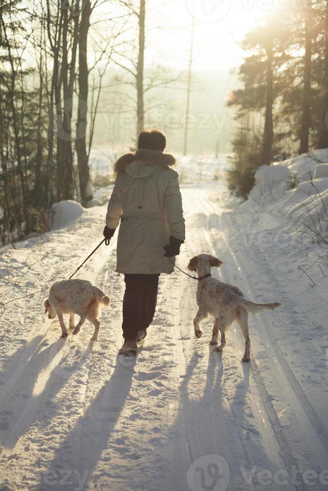 spazieren gehen mit den hunden im februar, oslo norwegen foto