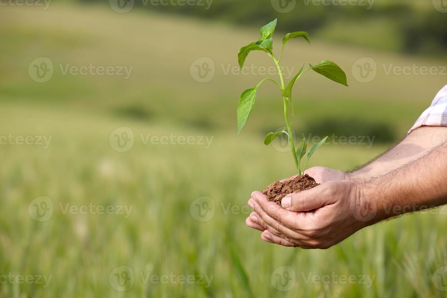Mannhände, die eine Pflanze halten. Ökologiekonzept foto